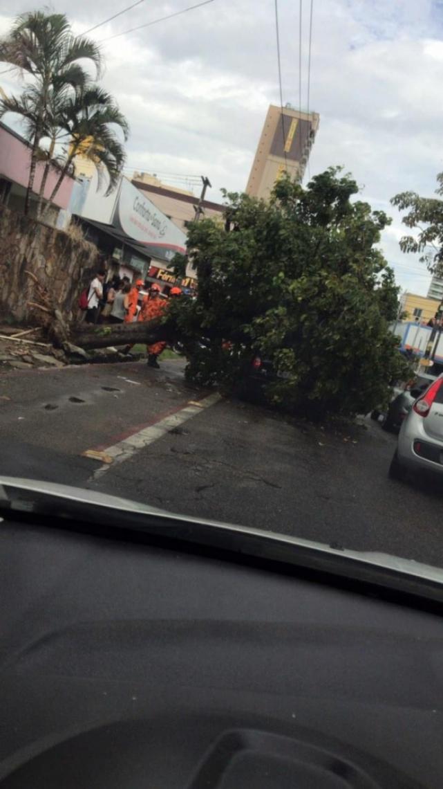 Motorista mandou o registro de árvore caída na Parquelândia