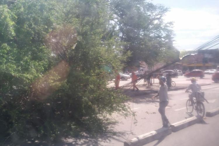Árvore caiu na Parquelândia no dia 8 de janeiro (Foto: Via Instagram O POVO)
