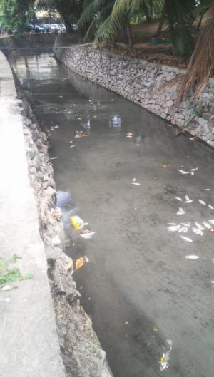 Moradores identificaram a presença de peixes mortos no Riacho Pajeú