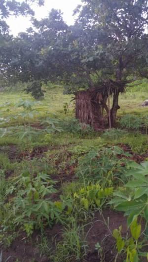Darlan e outros suspeitos fugiram pelo matagal