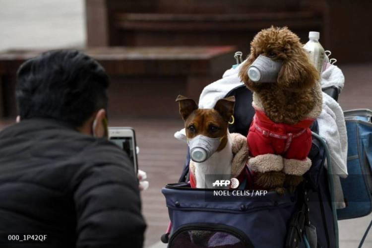 Homem faz fotos dos cachorros usando máscaras em Xangai (Foto: NOEL CELIS / AFP)