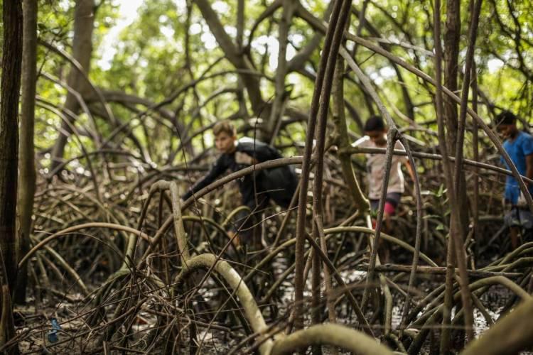Semana Estadual de Proteção aos Manguezais ocorrerá entre os dias 26 a 30 de julho, em formato online, por meio do canal do Youtube da Sema (Foto: Thais Mesquita)