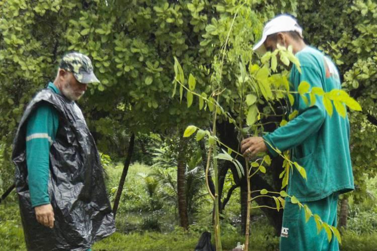 FORTALEZA, CE, BRASIL 04-03-2020:A Autarquia de Urbanismo e Paisagismo -  UrbFor realizou plantio de 120 mudas de árvores frutíferas na área do Sesi da Barra do Ceará. (Foto: Sandro Valentim/O POVO)