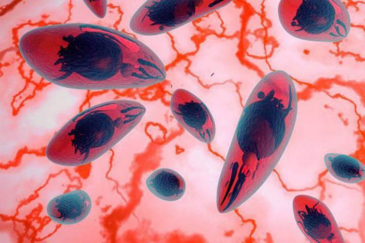 SUS oferecerá a recém-nascidos exame para toxoplasmose