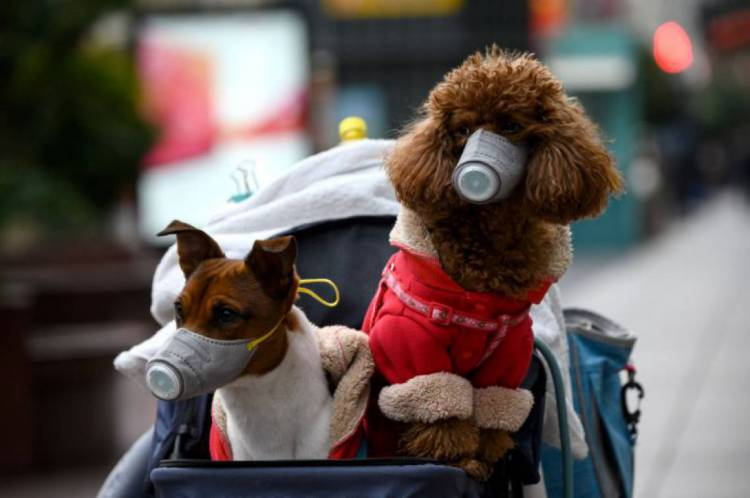 Apenas um caso de cão contaminado com Covid-19, com carga viral baixa, foi registrado.