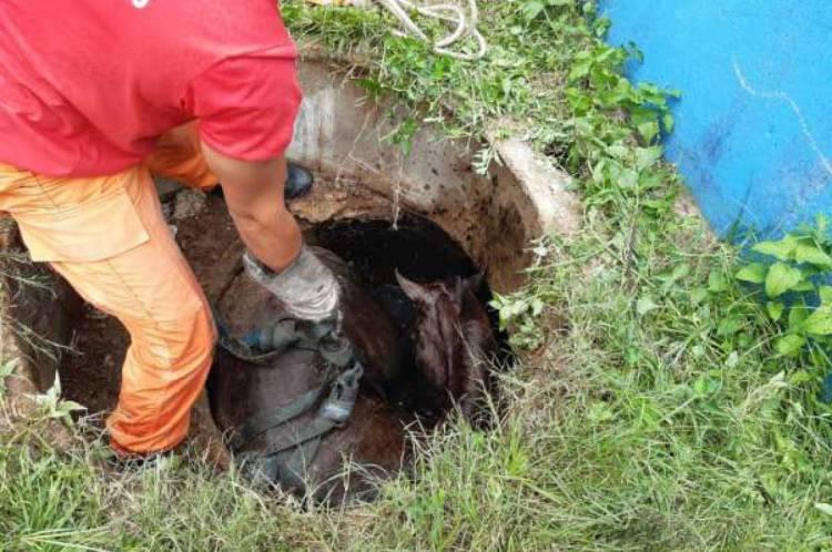 Corpo de Bombeiros resgata cavalo que caiu em fossa no Maracanaú