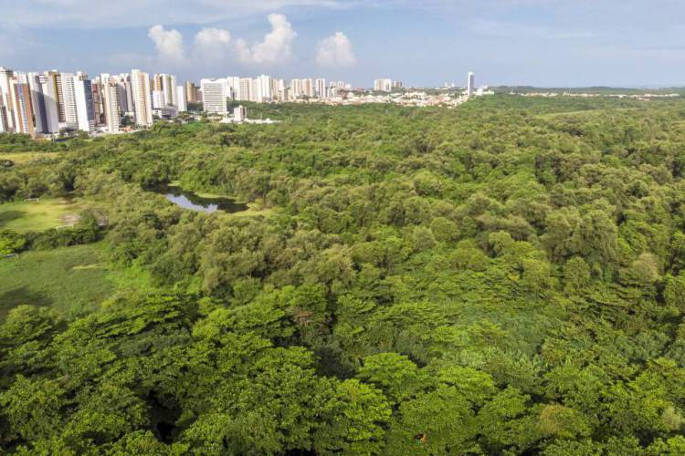 Parque do Cocó será posto avançado  (Foto: FCO FONTENELE)