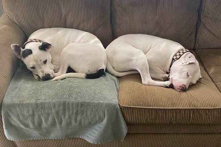 Abrigo consegue doar todos os bichos disponíveis (Foto: Reprodução/Instagram/Chicago Animal Care & Control)