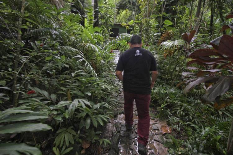 67 municípios do Ceará apresentam trechos da Mata Atlântica (Foto: MATEUS DANTAS)