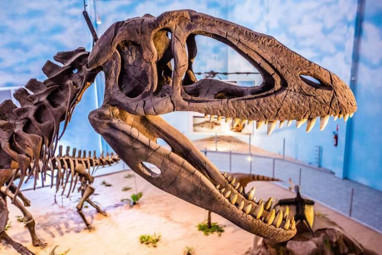 Passeio virtual pelo Museu de História Natural, do Zooparque de Itatiba, em São Paulo, ocorre nesta quinta, 21, às 15 horas (Foto: Acervo Zooparque/ Divulgação)