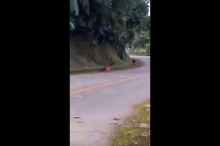 É falso que onça-parda foi vista em Guaramiranga (Foto: Reprodução)