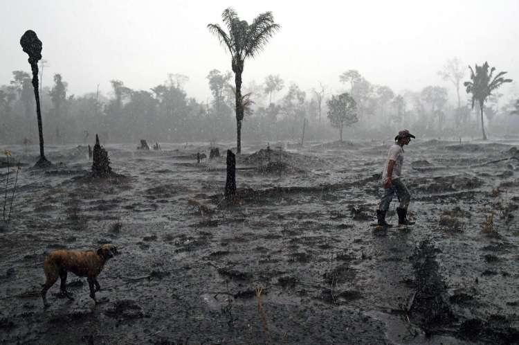 (ARQUIVOS) Nesta foto de arquivo tirada em 26 de agosto de 2019, o fazendeiro brasileiro Helio Lombardo Do Santos e um cachorro caminham por uma área queimada da floresta amazônica, perto de Porto Velho, Rondônia, Brasil (Foto: CARL DE SOUZA / AFP)