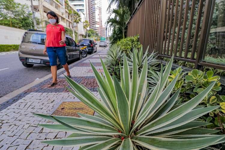 Plantas pontiagudas no bairro Meireles (Foto: FCO FONTENELE)