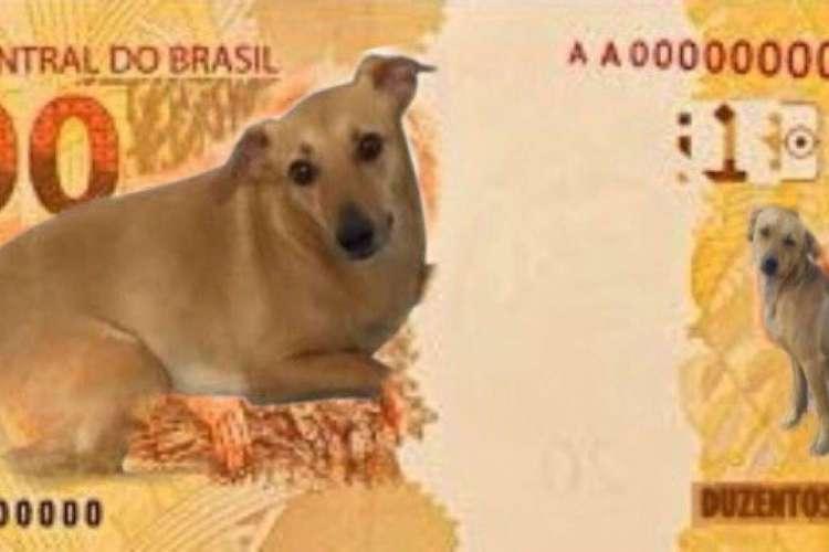 Vira-lata caramelo que repercutiu na internet como meme da nota R$ 200 quase estampou a cédula devido ação de combate aos maus-tratos contra animais do Banco Central. (Foto: Reprodução/Twitter)