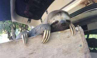 Animal de fauna silvestre foi entregue voluntariamente às autoridades.