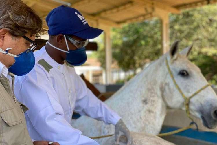 Soros produzidos por cavalos têm anticorpos potentes para Covid-19 (Foto: divulgação)
