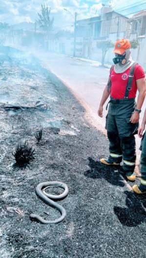 Bombeiros debelam incêndio no bairro Renato Parante, em Sobral (Foto: Foto: Ascom/ Corpo de Bombeiros Militar)