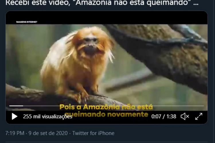 Mico-leão-dourado é registrado na Mata Atlântica e não é encontrado na floresta amazônica, como vídeo indica (Foto: Reprodução/Twitter)