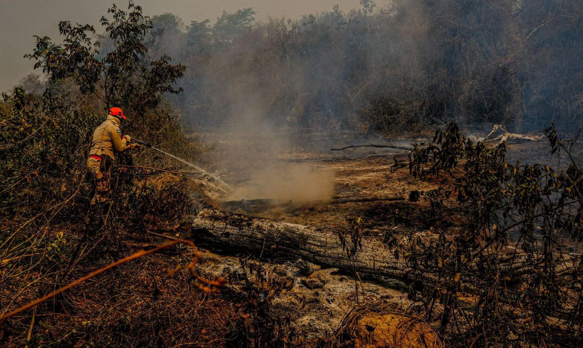 Queimadas no Pantanal e estiagem causam preocupação no MT e MS (Foto: )
