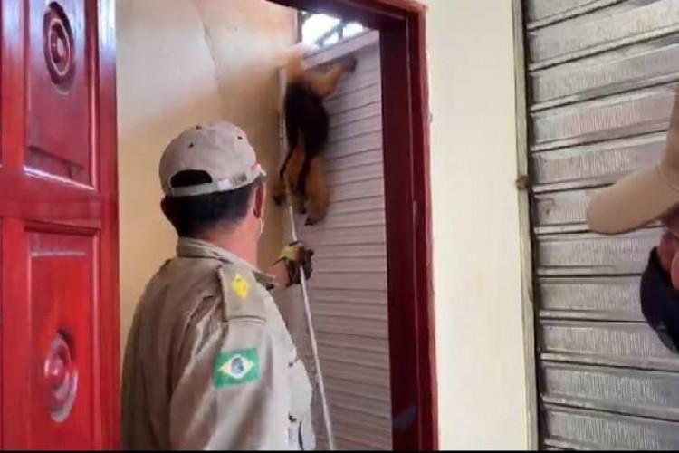 PMCE e Corpo de Bombeiros estiveram envolvidos nos regastes dos animais (Foto: Divulgação)