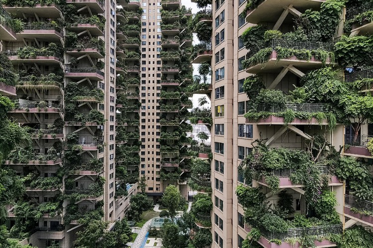 Registros do início de setembro mostram edifícios de aparência negligenciada, com miniflorestas que se estendem por muitas varandas e paredes externas (Foto: AFP)