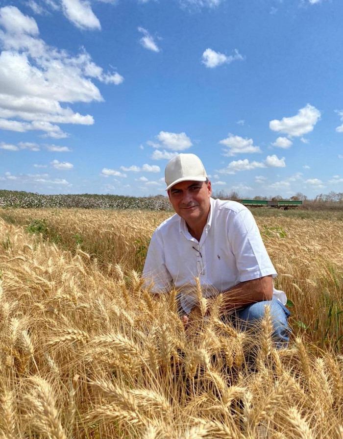 O produtor Alexandre Sales conclui a primeira colhei de trigo neste mês de setembro e já planeja as próximas  (Foto: Arquivo Pessoal )