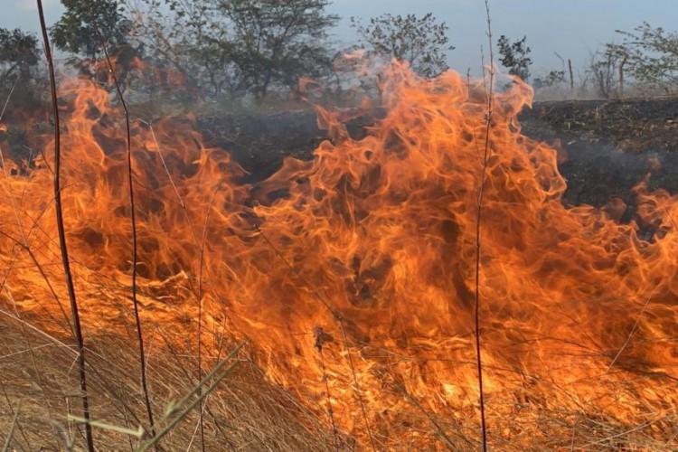 O flagrante ocorreu na CE-253, na rodovia Antônio Clemente de Araújo, em Mucambo, na região Norte do Ceará.  (Foto: Demitri Túlio/O POVO)
