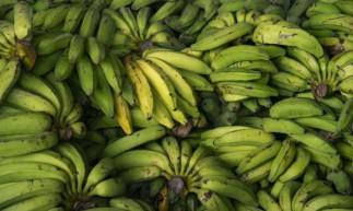 Banana prata cai de preço na Ceasa, em Maracanaú
