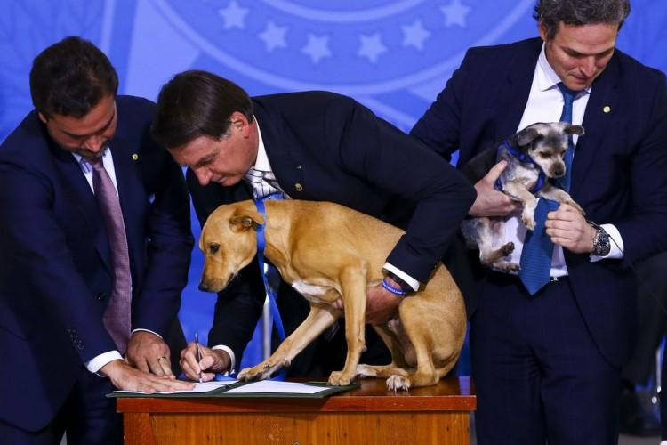 Bolsonaro sanciona  lei que aumenta pena maus-tratos a animais (Foto: Marcelo Camargo/Agência Brasil)