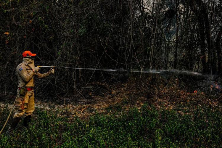 DF, SC e Ibama vão reforçar operação contra incêndios no Pantanal (Foto: )