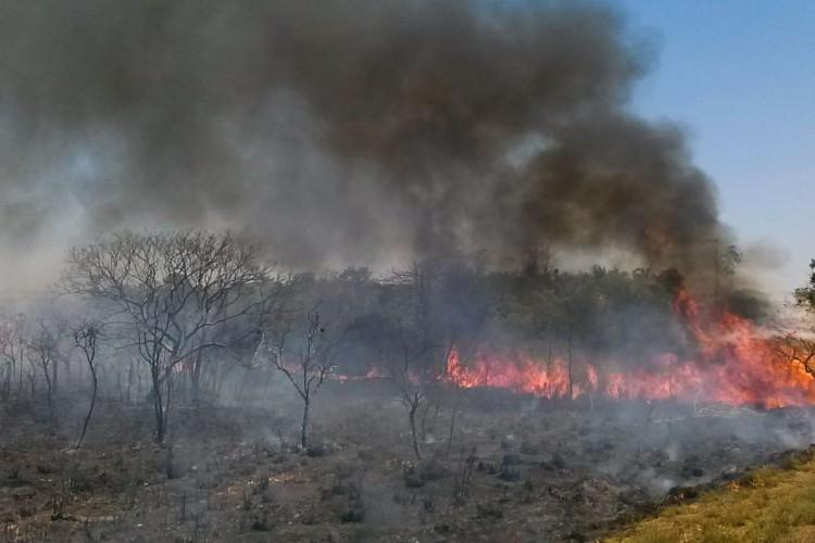 O Cerrado sofre com as queimadas neste período de estiagem,  a baixa umidade no DF no fim de semana levou a Defesa Civil a declarar estado de emergência na capital(Jose Cruz/Agência Brasil) (Foto: José Cruz/Agência Brasil)
