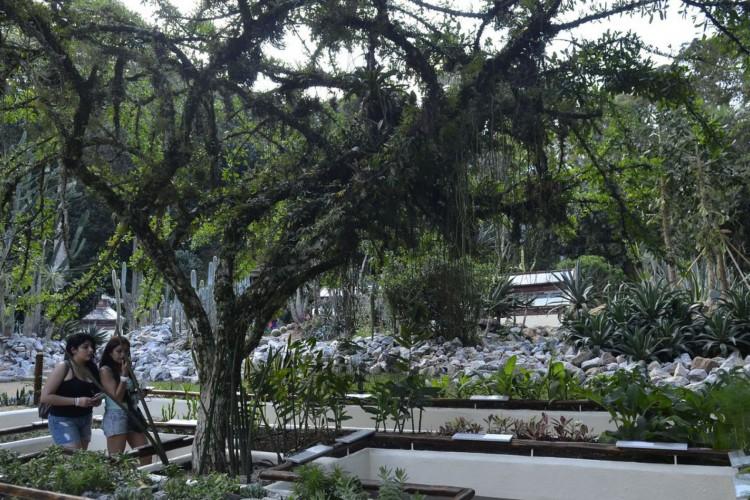 Jardim Botânico do Rio de Janeiro reabriu hoje (30) o Jardim Sensorial, espaço que oferece um conjunto de plantas com diferentes texturas e aromas, que os visitantes podem tocar e cheirar (Tomaz Silva/Agência Brasil) (Foto: Tomaz Silva/Agência Brasil)