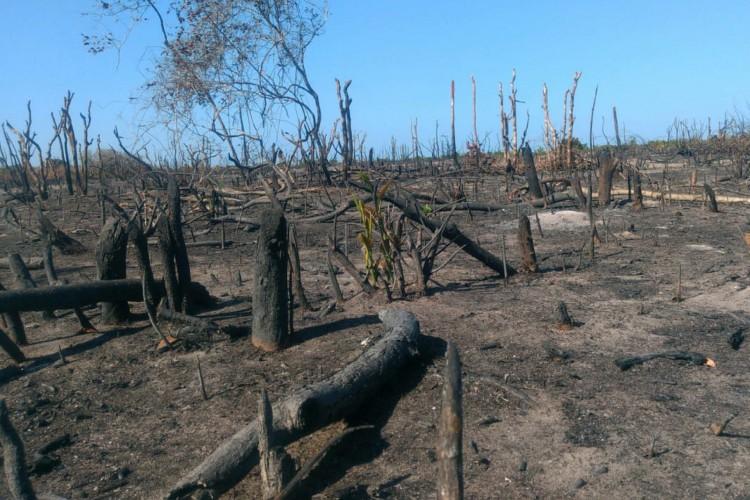 No Ceará, foram identificados 48 alvos em 11 municípios litorâneos, que teriam áreas de desmatamento (Foto: Divulgação/MPCE)