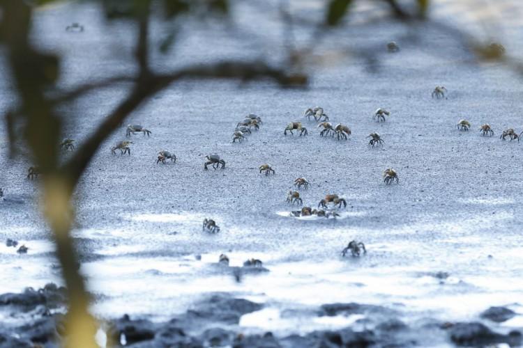 O Parque Natural Municipal Barão de Mauá, em Magé (RJ), revela a recuperação do manguezal em área afetada após o desastre que liberou 1,3 milhão de litros de óleo de um duto da Petrobras, em 2000. (Foto: Tomaz Silva/Agência Brasil)