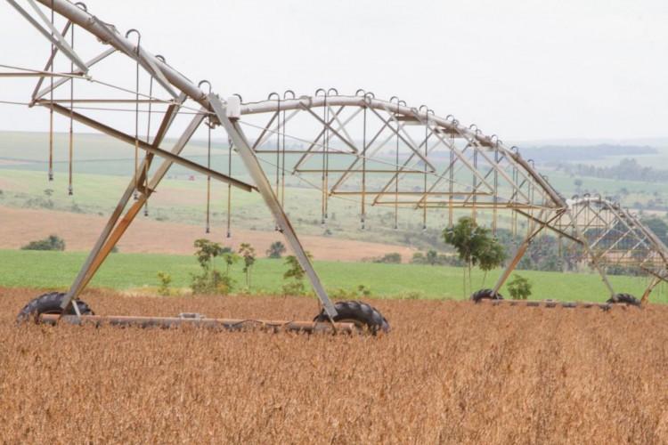 Setor de soja se destacou (Foto: Tony Oliveira/divulgação)