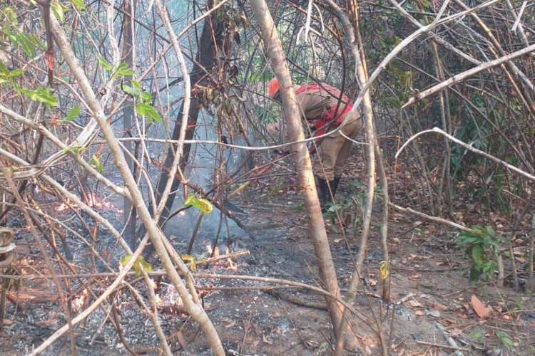 Maior parte do incêndio na Chapada dos Veadeiros é controlado (Foto: )