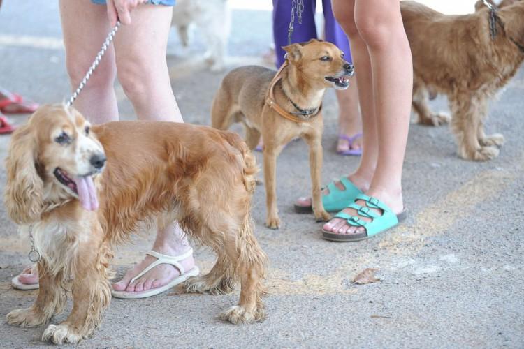 Outubro Rosa Pet alerta para câncer de mama em cadelas e gatas (Foto: FABIO RODRIGUES-POZZEBOM/ABR)