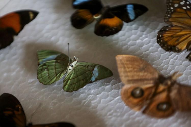 O médico Luiz Cláudio Stawiarski doará uma coleção de mais de 2 mil espécimes de borboletas e outros insetos para o Museu Nacional do Rio de Janeiro. (Foto: Marcelo Camargo/Agência Brasil)