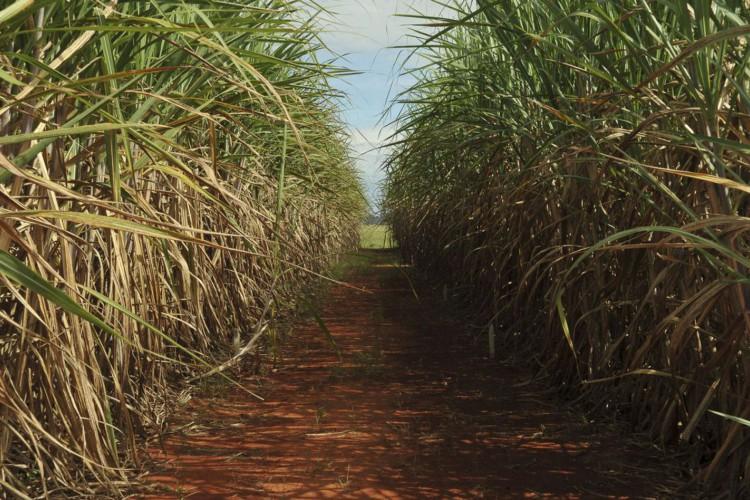 Evento destaca importância do seguro rural para cana-de-açúcar (Foto: )