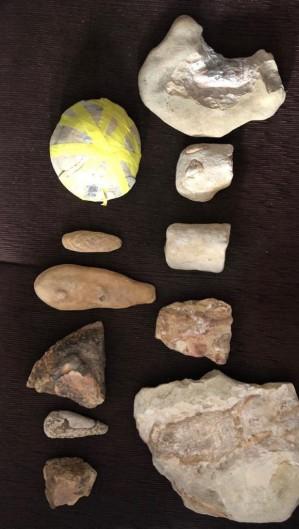 Dezenas de fósseis foram apreendidos nesta manhã (Foto: Divulgação/PF)