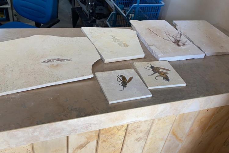 Operação investiga tráfico de fósseis na Chapada do Araripe (Foto: Divulgação/PF)