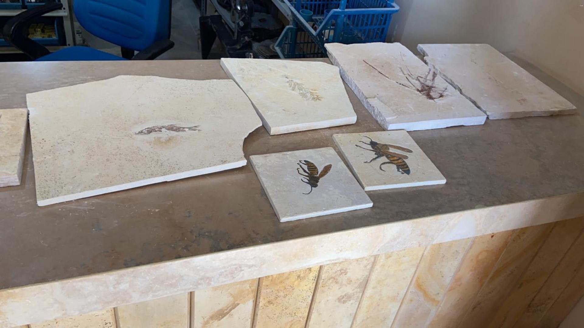Lá, paleontólogos escavam um nº absurdo de fósseis bem conservados. O grupo dos insetos é o maior: 230 espécies.