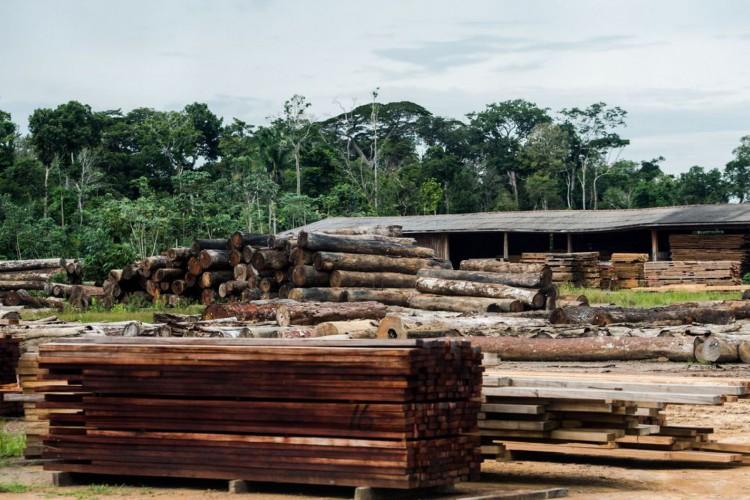 Colniza, MT, Brasil: Toras de madeira em pátio de serraria próximas ao município de Colniza, noroeste do Mato Grosso.  (Foto: Marcelo Camargo/Agência Brasil) (Foto: Marcelo Camargo/Agência Brasil)