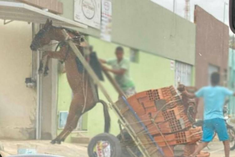 Animal aparece suspenso no ar enquanto carga de tijolos está declinada (Foto: Divulgação)
