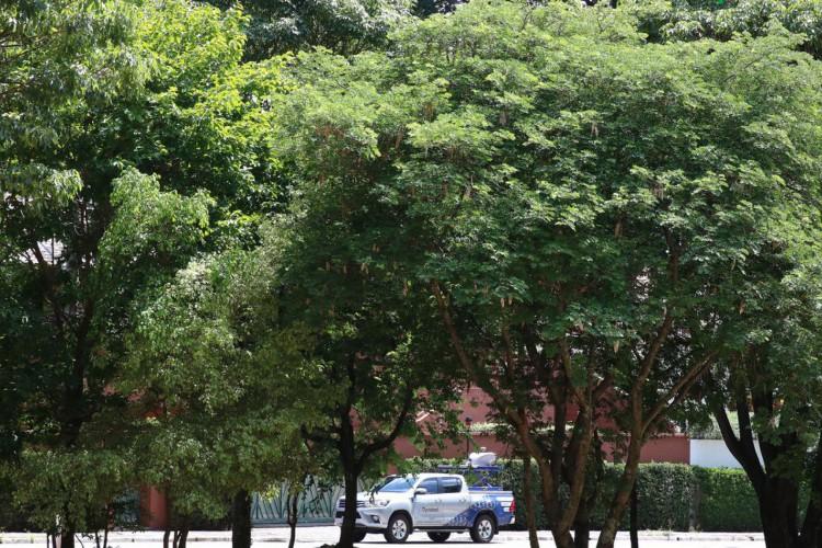 A Prefeitura de São Paulo, por meio da Divisão de Arborização Urbana (DAU) da Secretaria do Verde e do Meio Ambiente , inaugurou  um projeto-piloto de escaneamento das árvores. (Foto: Rovena Rosa/Agência Brasil)