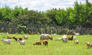 Programa avaliará sistemas integrados e alternativas para aumento de produção de alimentos para rebanhos em três regiões nordestinas.