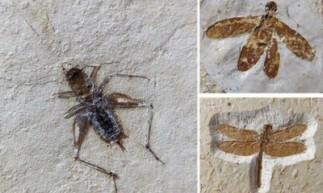 Foram 60 espécimes apreendidos, entre eles um pterossauro, uma raia e o restante insetos e aracnídeos.