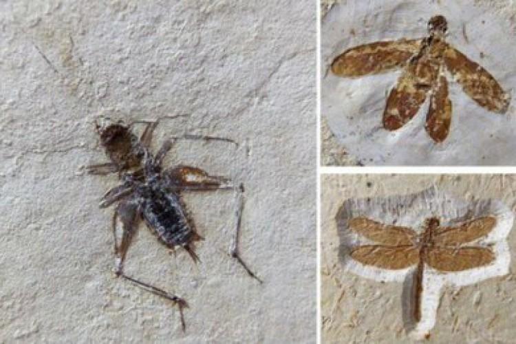 Foram 60 espécimes apreendidos, entre eles um pterossauro, uma raia e o restante insetos e aracnídeos.  (Foto:  Relatório da URCA)
