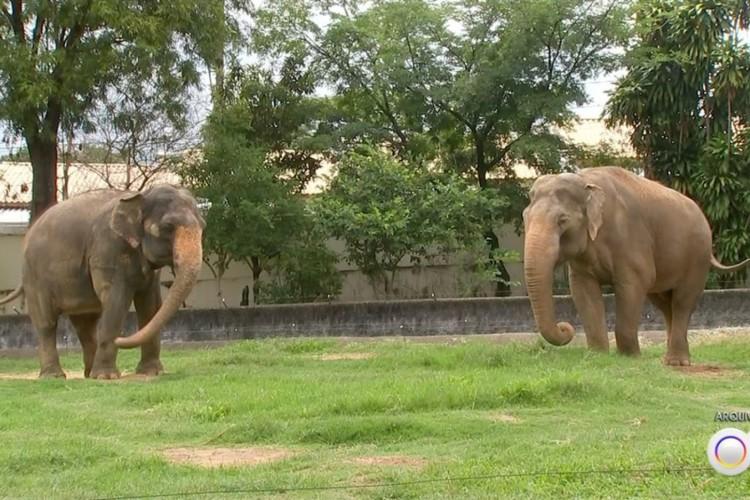 Sandro e Haisa no zoo de Sorocaba (SP). (Foto: TV TEM/Arquivo)