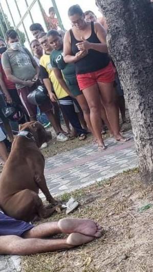 O cachorro permaneceu com a vítima até a chegada do socorro (Foto: WhatsApp O POVO)